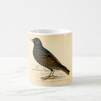 Classic Zoological Etching - Starling Mugs