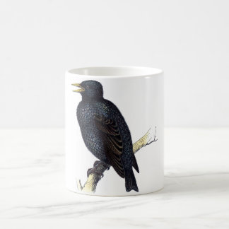 Classic Zoological Etching - Starling Coffee Mug