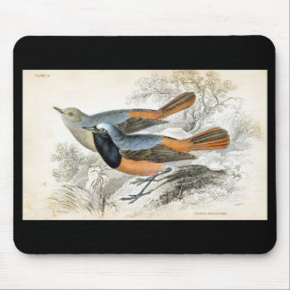 Classic Zoological Etching - Tithys Redstart Mouse Pad