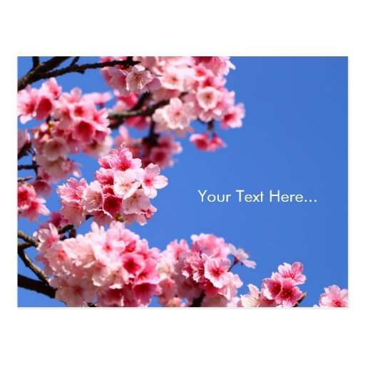 Classy Cherry Blossom Postcards