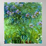 Claude Monet: Agapanthus Póster