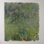Claude Monet - Agapanthus Póster