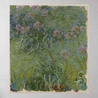 Claude Monet - Agapanthus Print