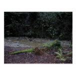 Clave cubierta de musgo el bosque tarjeta postal