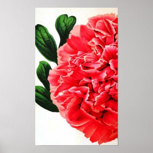 Clavel botánico de la impresión poster
