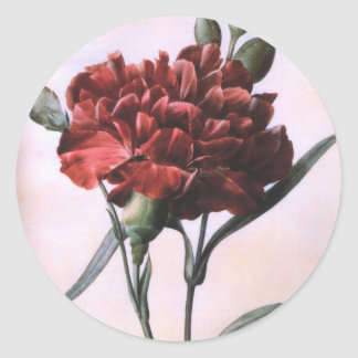 Clavel del rojo del vintage pegatina redonda