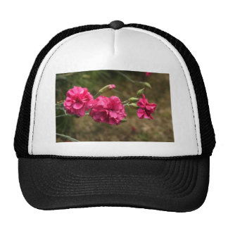 clavel gorras