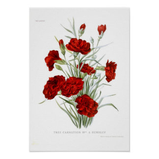 Clavel Posters