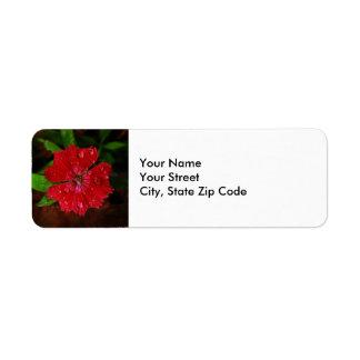 Clavel rojo con la etiqueta del remite de las etiqueta de remite