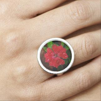 Clavel rojo con las gotas de agua anillos