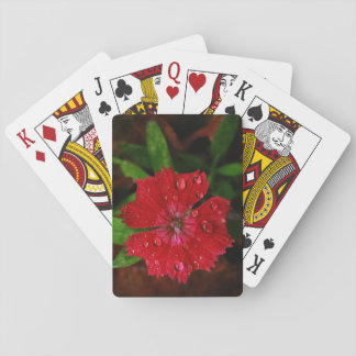Clavel rojo con las gotas de agua cartas de juego