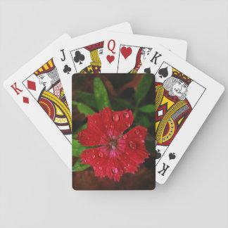 Clavel rojo con las gotas de agua cartas de póquer