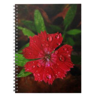Clavel rojo con las gotas de agua cuadernos