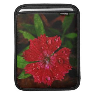 Clavel rojo con las gotas de agua fundas para iPads