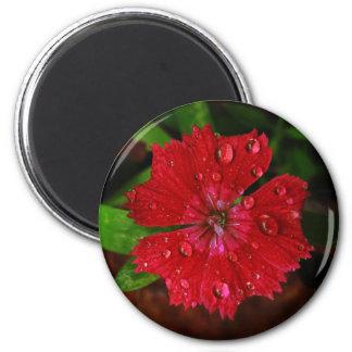 Clavel rojo con las gotas de agua imán redondo 5 cm
