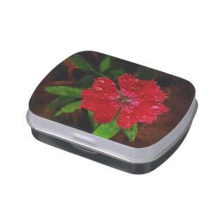 Clavel rojo con las gotas de agua latas de caramelos