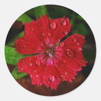 Clavel rojo con las gotas de agua pegatina redonda