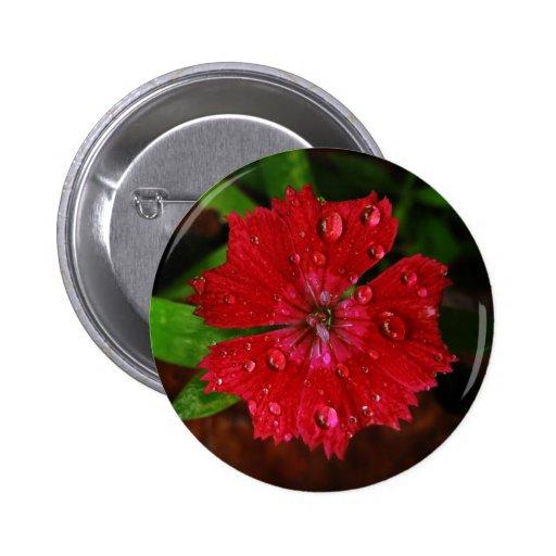 Clavel rojo con las gotas de agua pin redondo de 2 pulgadas