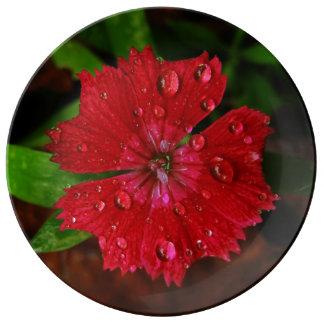 Clavel rojo con las gotas de agua plato de cerámica