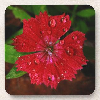Clavel rojo con las gotas de agua posavaso
