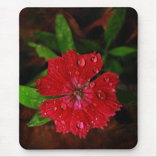 Clavel rojo con las gotas de agua tapetes de ratón