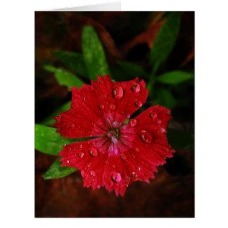 Clavel rojo con las gotas de agua tarjeton