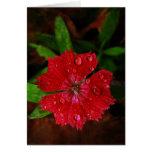 Clavel rojo con las gotas de agua tarjeta
