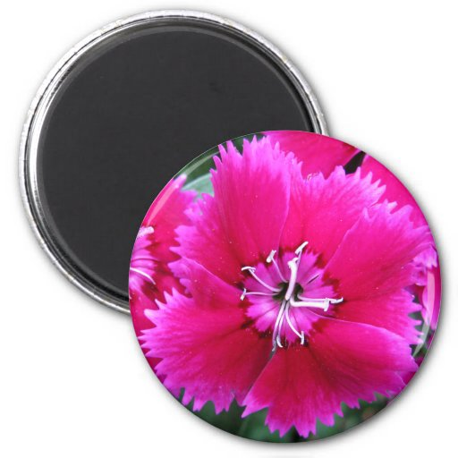 Clavel rosado imán redondo 5 cm