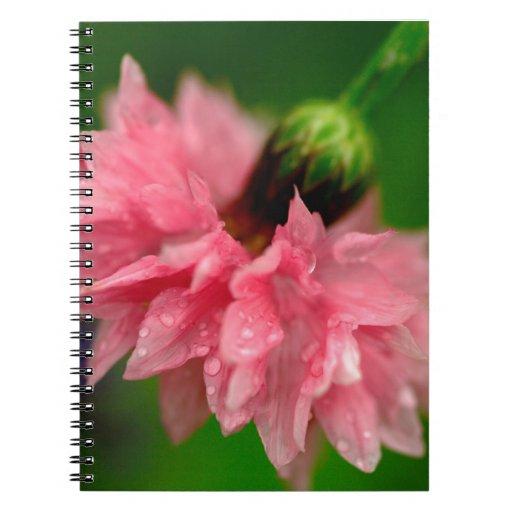 Clavel rosado libretas espirales
