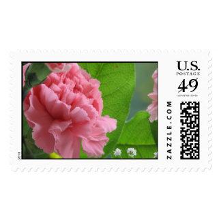 Clavel rosado sellos