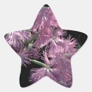 Clavel rosado Tom Wurl Pegatina En Forma De Estrella