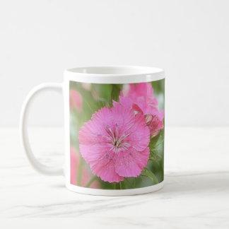 Clavel Williams dulce rosado Tazas