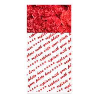 Claveles rojos rojos tarjeta fotografica