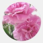 Claveles rosados 1 pegatinas redondas