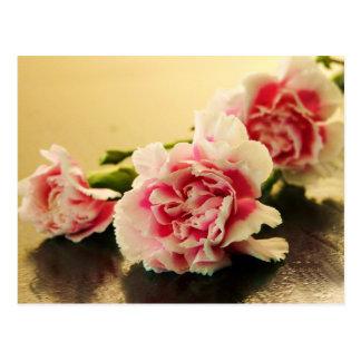Claveles rosados postal