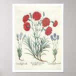 Claveles y lavanda: 1.Caryophyllus maximus pl Poster
