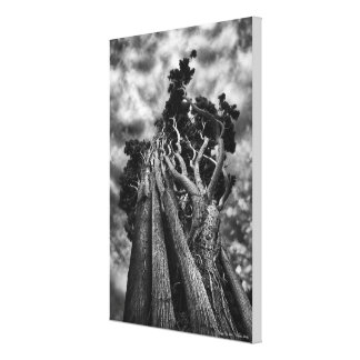 Clawing The Skies - MEDIUM Canvas Print