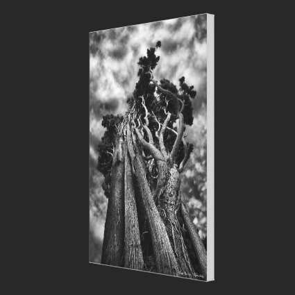 Clawing The Skies - MEDIUM Gallery Wrapped Canvas