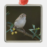 Clay-colored Sparrow, Spizella pallida, adult Ornaments