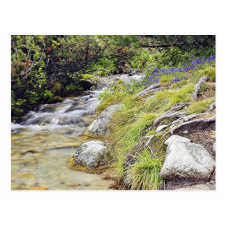 Clean Cold Stream In High Tatras In Slovakia Postcard