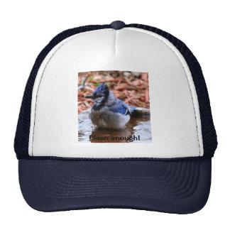 """""""Clean enough"""" Blue Jay Hat"""