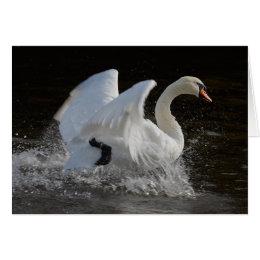 Clean Swan card