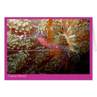 Cleaner Shrimp gift card - 01 - pink