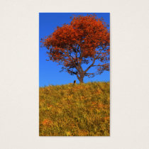 Clear Autumn Day Bookmarks
