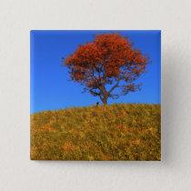 Clear Autumn Day Button