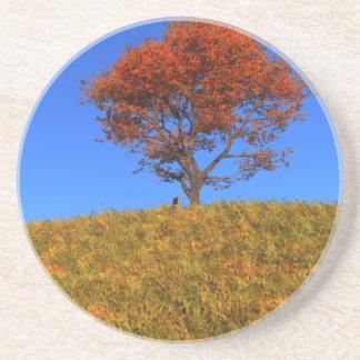 Clear Autumn Day Coaster