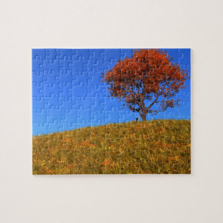 Clear Autumn Day Puzzle