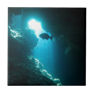 Clear blue cave and fish tile