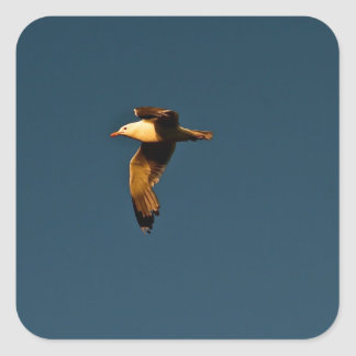 CLEAR BLUE SKY WITH SEABIRD IN FLIGHT SQUARE STICKER