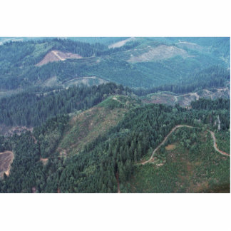 Clear Cuts, Old Growth (Aerial) Cut Outs